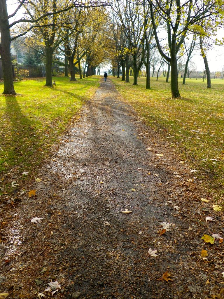 Path through the Park