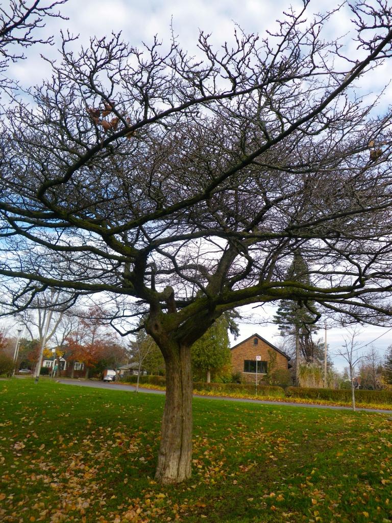 Flat top tree