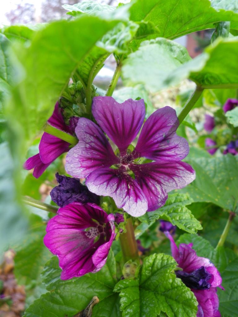 Beautiful purple bloom