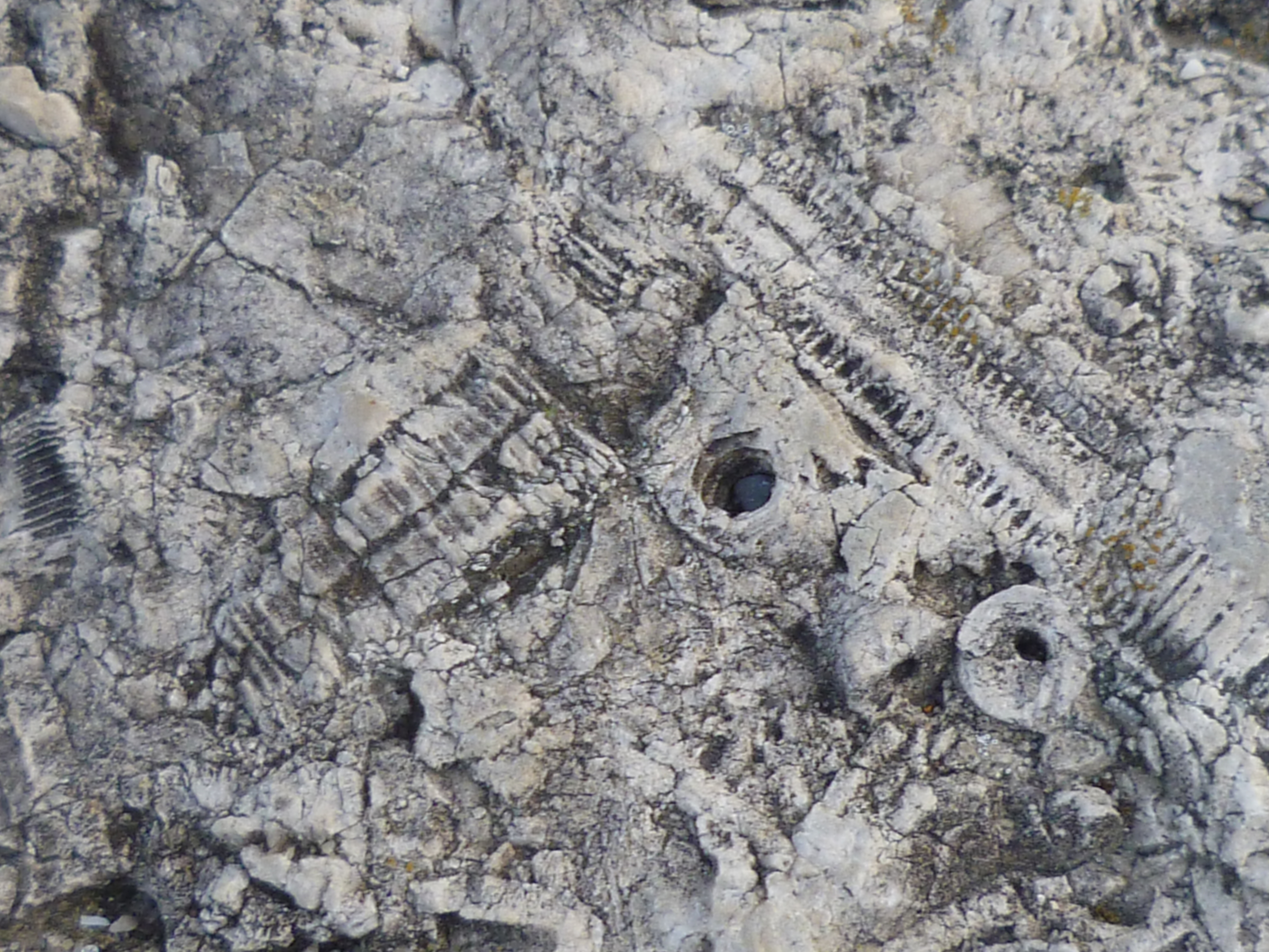 Fossils embedded in the rock.
