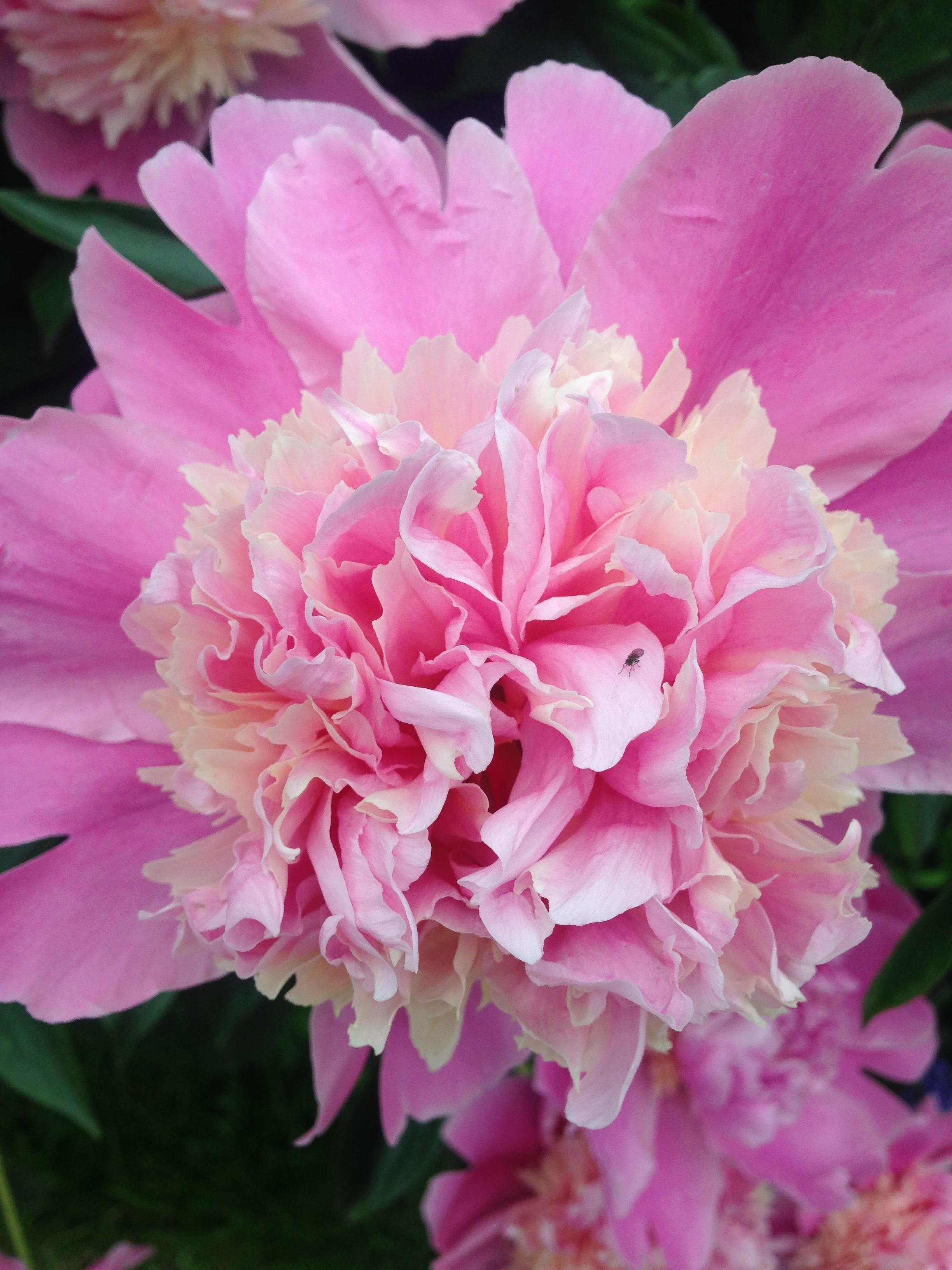 a través de New Flower (June 22, 2017) – Light Pin…
